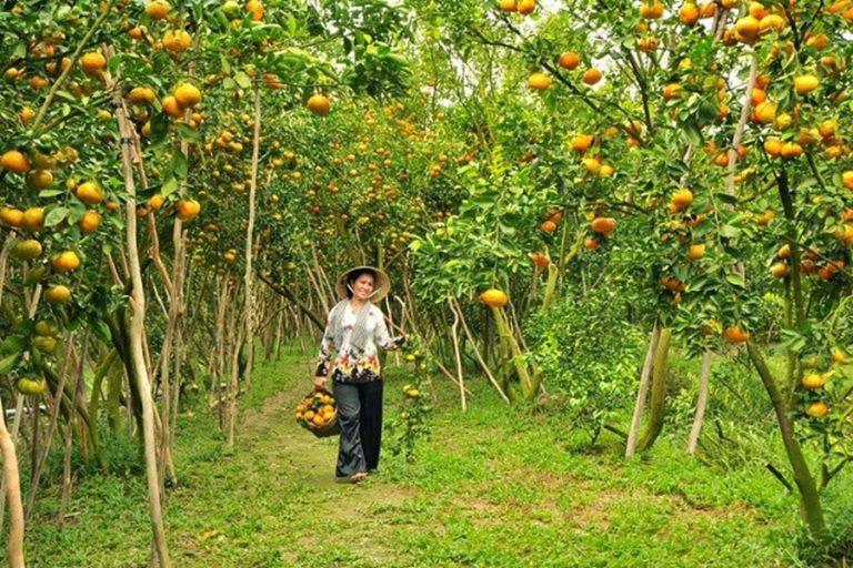Jardin de cai be delta du mekong