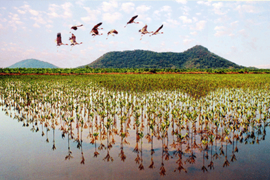 la réserve Kien Giang