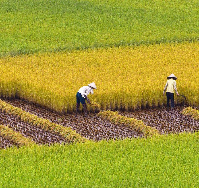 Treks & Rando Du nord au sud vietnam 20 jours